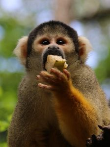 Tourism boost for KZN as Monkeyland sanctuary set to open to the public