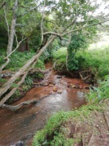 Wild serenity at Hillcrest's hidden haven