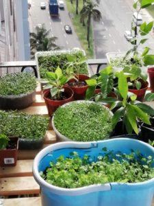 'My indoor garden… 13 floors high'
